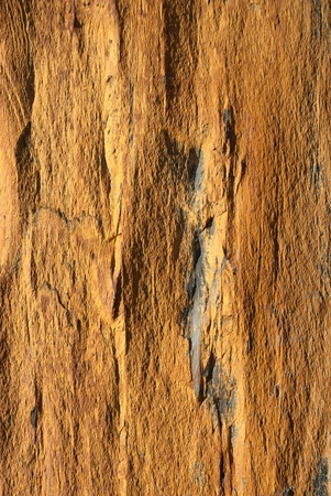 Background texture of earthy colored shale stone. photo