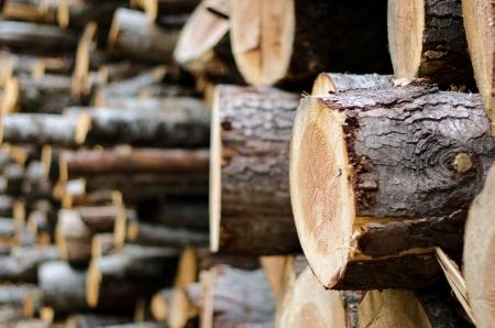 Holzstapel Hintergrund, auf dem rechten Baumstamm zu konzentrieren.