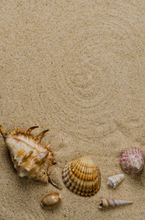 Sea shells with sand as background. photo