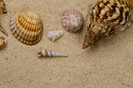Closeup of seashells on the sand photo