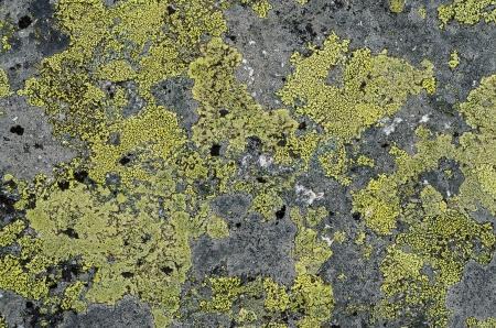 mossy: Grunge old stone background