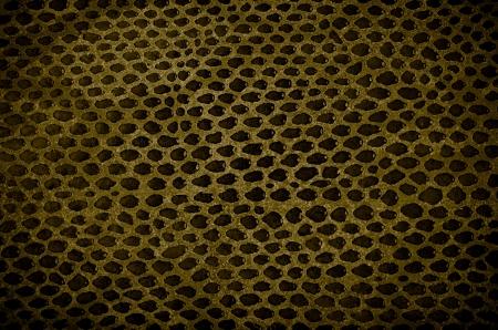snake texture: Closeup of snake Skin Leather Texture. Stock Photo