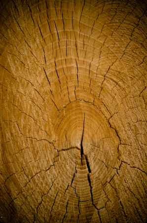 Abstract crack wood spiral style background photo