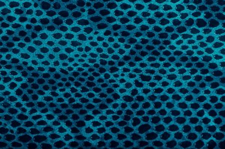 Blue python snake skin texture background. photo