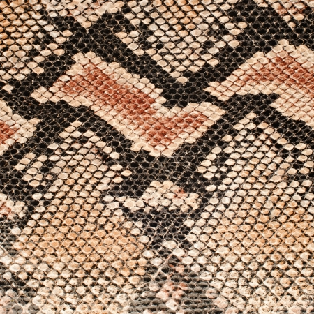snake skin pattern: Closeup on snake skin pattern background.