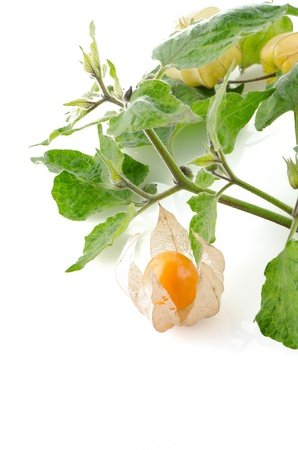 cape gooseberry: Cape gooseberry (physalis) fruit on white background.