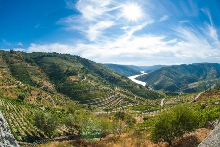 アルト ドウロ ワイン地域ポルトガル北部のドウロ渓谷の段々 になったブドウ園 写真素材