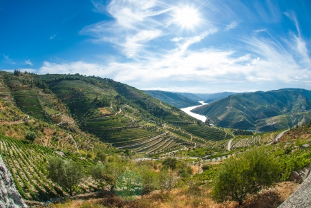 Terraced vineyards in Douro Valley, Alto Douro Wine Region in northern Portugal