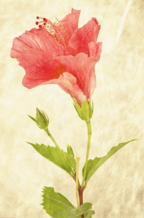 Textured background with pink hibiscus flower photo