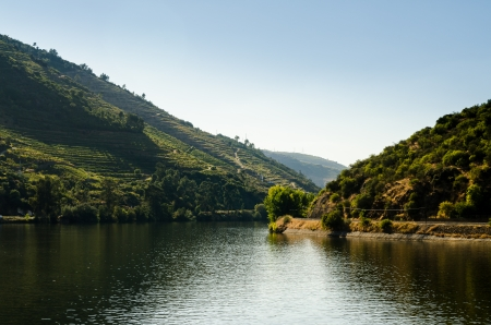 portugal agriculture: Terraced vineyards in Douro Valley, Alto Douro Wine Region in northern Portugal