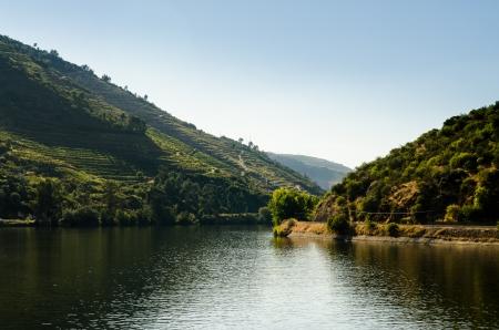viniculture: Terraced vineyards in Douro Valley, Alto Douro Wine Region in northern Portugal