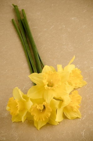 jonquil: Yellow jonquil flowers on paper background