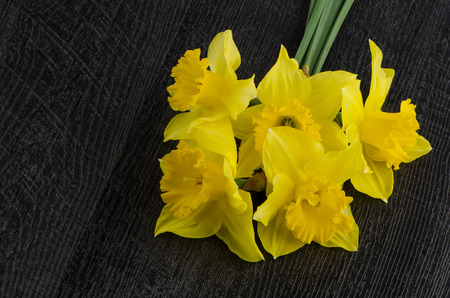 jonquil: Yellow jonquil flowers on dark wooden background.