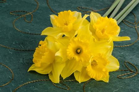 jonquil: Yellow jonquil flowers on green background. Stock Photo