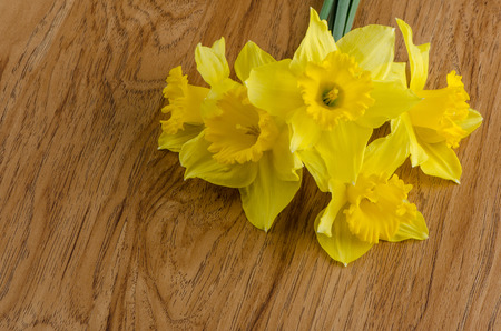 jonquil: Yellow jonquil flowers on wooden background.