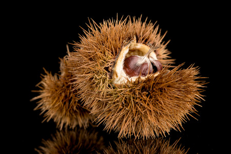 lustre: Closeup of chestnuts on a black reflective background.