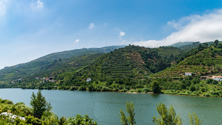 portugal agriculture: Vineyards are on a hills, view of Douro Valley, Portugal.