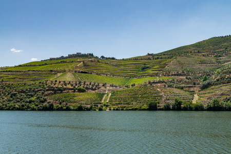 designated: Point of view shot from historic train in Douro region, Portugal. Features a wide view of terraced vineyards in Douro Valley, Alto Douro Wine Region in northern Portugal, officially designated by UNESCO as World Heritage Site.