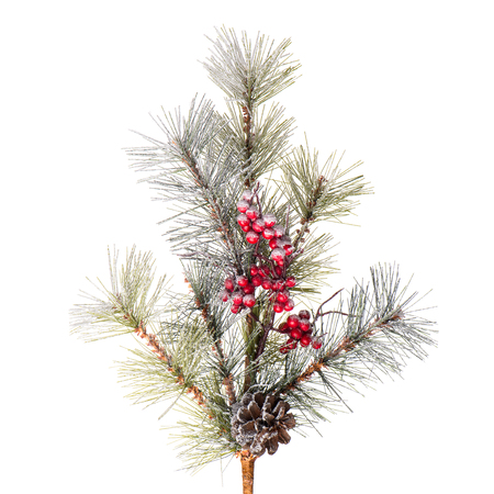 Christmas tree branch isolated on white background.