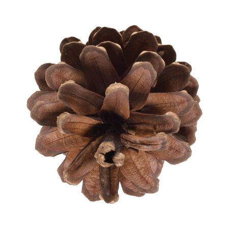 Natural pine cone isolated on white background. 免版税图像