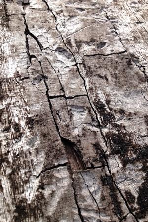 Wood texture Stock Photo - 22212299