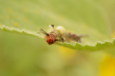 Caterpillar on Leaf photo