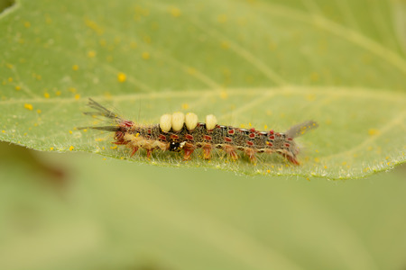 Caterpillar en hoja  photo