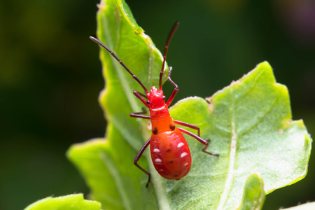 red bug photo