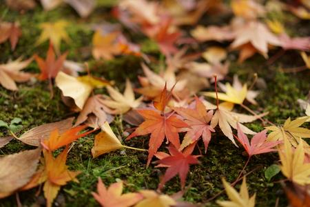 autumn garden: Defoliation Stock Photo