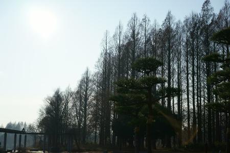 metasequoia: Forest of Metasequoia