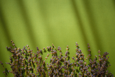 Lavender flowers on green background with shadows.