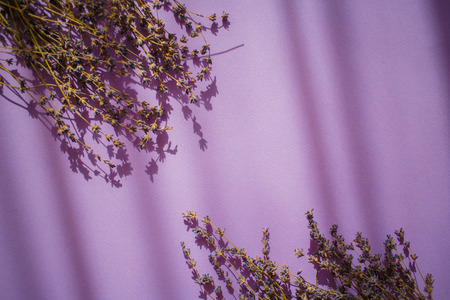 Lavender flowers on a violet background with shadows.