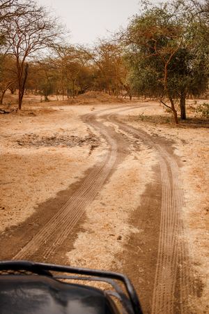 Car safari going on sandy road. Wild life in Safari. Baobab and bush jungles in Senegal, Africa. Bandia Reserve. Hot, dry climate. Vertical view from outside the car.