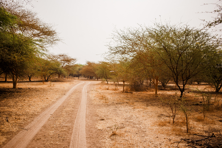 Sandy road. Wild life in Safari. Baobab and bush jungles in Senegal, Africa. Bandia Reserve. Hot, dry climate. Stock Photo