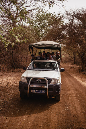 Safari Jeep with tourists going away forward on sandy road. Wild life in Safari. Baobab and bush jungles in Senegal, Africa. Bandia Reserve.