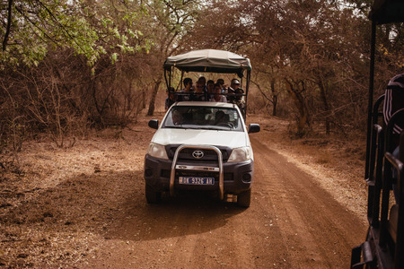 Safari Jeep with tourists going away forward on sandy road. Wild life in Safari. Baobab and bush jungles in Senegal, Africa. Bandia Reserve. Hot, dry climate.