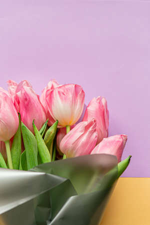 Tender pink tulips on pastel violet and yellow background. Greeting card for Women's day. Flat lay. Copy space. Place for text. Concept of international women's day, mother's day, easter. 免版税图像
