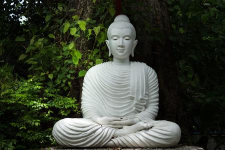 buddism: white buddha image sitting under the tree for meditation.