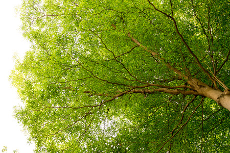 spring green: Tropical trees grow up in the rain-forest.