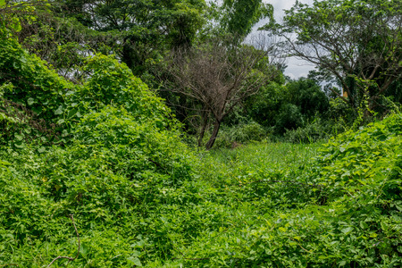 country life: Some of country life places in Chiang Mai, Thailand surrounded by jungle and the creeping plants.