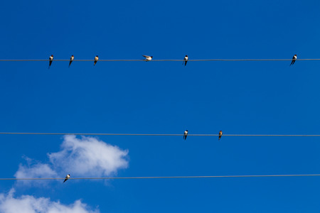 cleared: Miniature birds are crowding on electric wire.