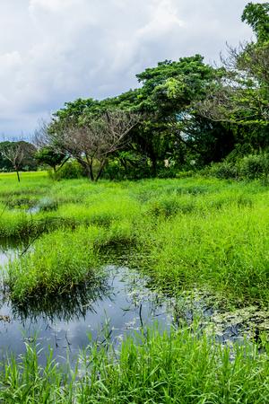 ecosistema: Ecosystem was shown in rich and abundant flora.