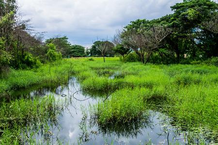 ecosistema: Ecosistémico, que se muestra en la flora rica y abundante. Foto de archivo