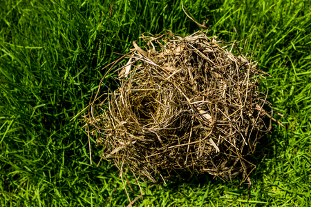Birds nest covering in the grass field, blurry background and selective focus.