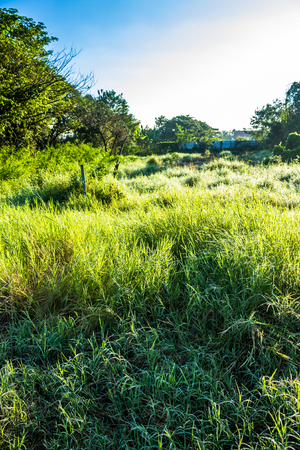 ChiangMai, Thailand. January, 15-2017: Grassfield in some place growing up rapidly in natural background. Stock Photo