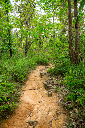 Jungle trail leads to the top of a mountain at some place in rural area. Stock Photo