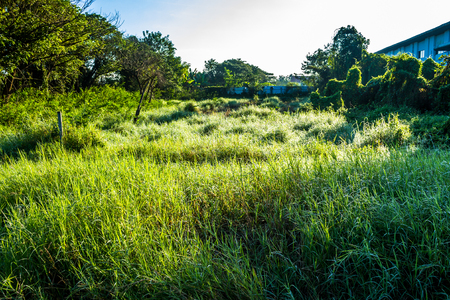 Grassfield in some place growing up rapidly in natural background.