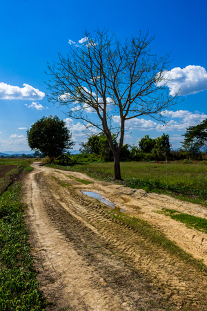 Community road leads to countryfield and passby bare tree in some place at rural area of Chiang Mai province.