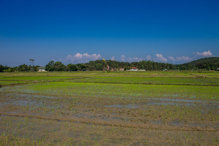 ChiangMai, Thailand. January, 19-2017: The rice field in the countryside of Chiang Mai province was prepared for rice planting. Stock Photo