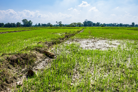 The rice field in the countryside of Chiang Mai province was prepared for rice planting.